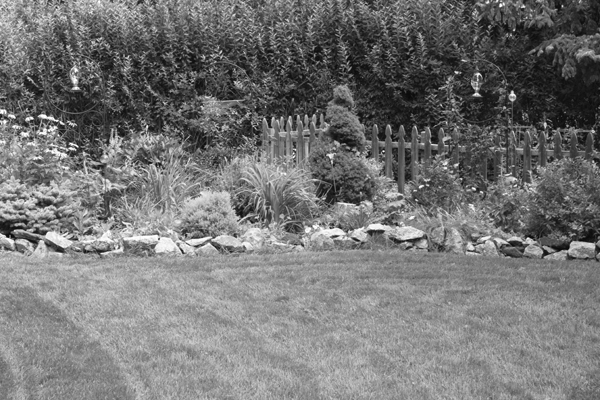the garden in black and white