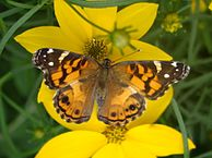 194px-Butterfly_House_4