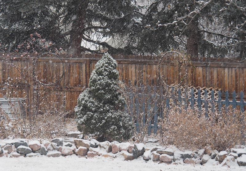 a picture of the garden while its snowing